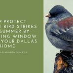 bird strike window film dallas